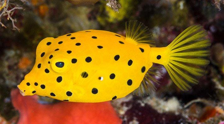 View Album - François Libert's Fish Pictures