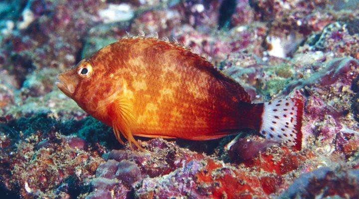 View Album - Richard Field - Gulf of Oman (12)